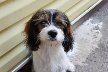 Wunderschöne 5 monate alte junge mischling hunde
