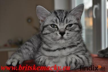 Wunderschöne whiskas Kätzchen zu verkaufen