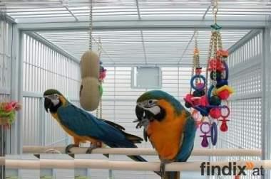 Zärtlich Blau und Gold Ara Papageien