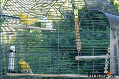 zwei Kanarien Vögel