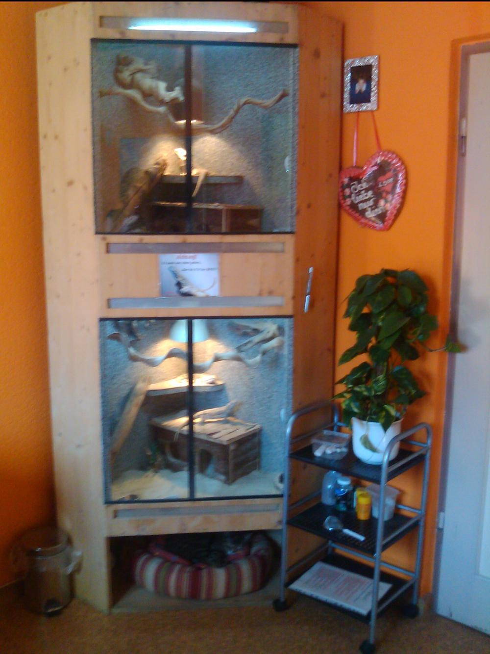 4 bartagamen mit gro en terrarium 427268. Black Bedroom Furniture Sets. Home Design Ideas