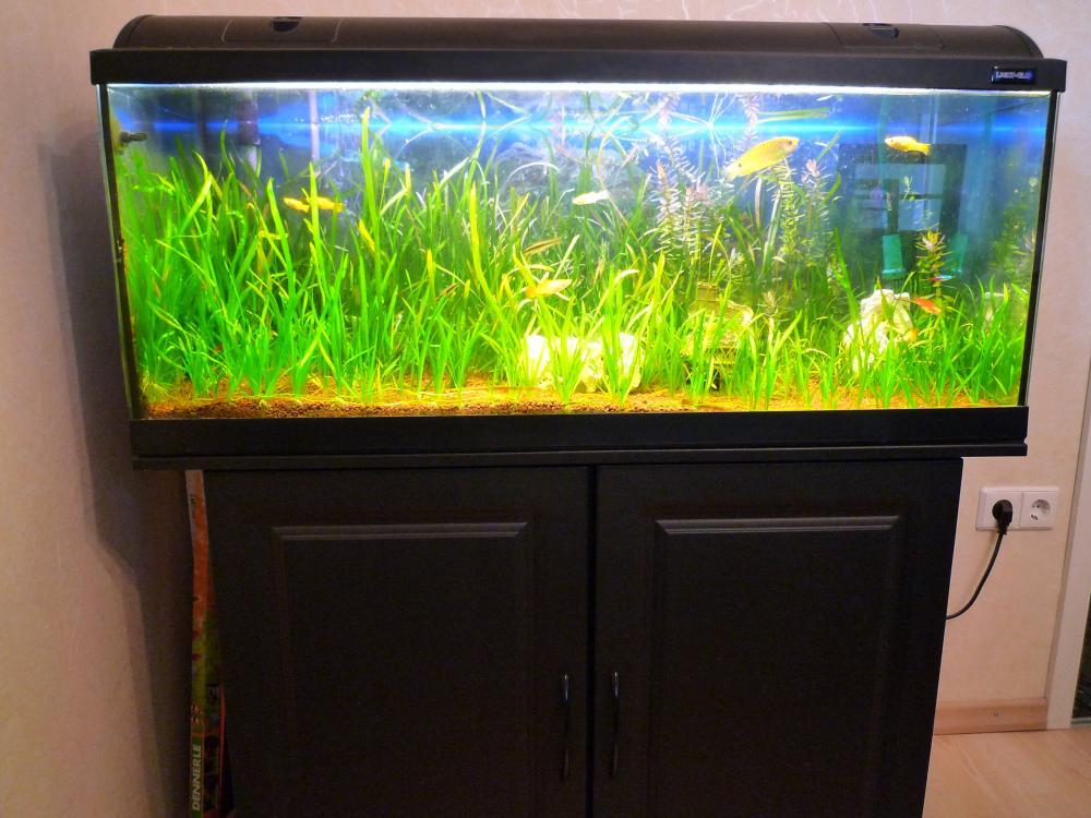 aquarium 200 liter 100x40x40 mit unterschrank und. Black Bedroom Furniture Sets. Home Design Ideas