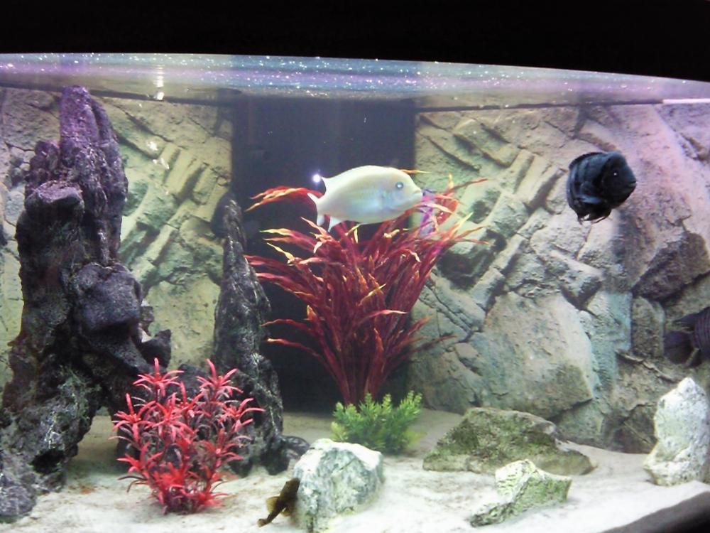 Aquarium juwel 350 liter 807264 for Aquarium 350 litres