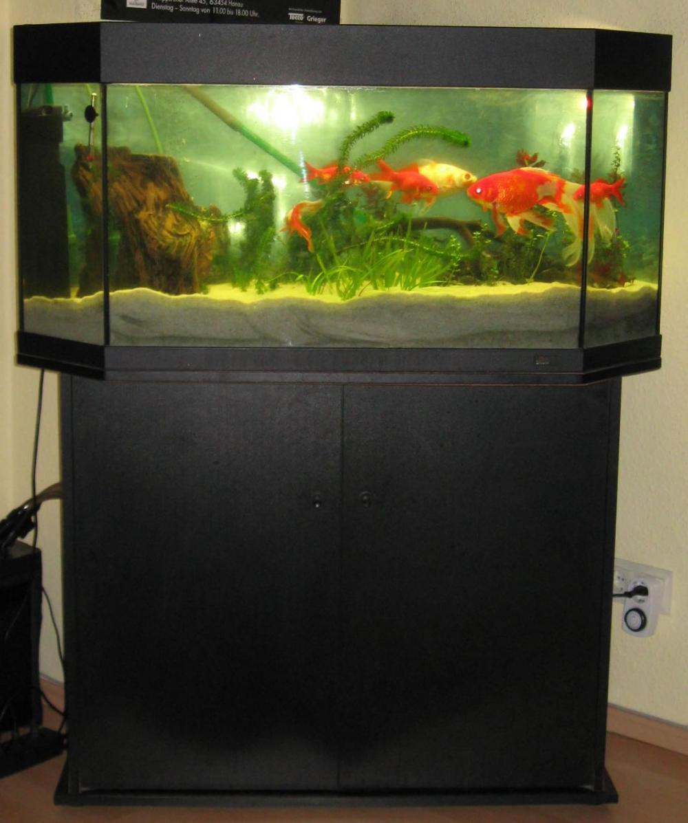 Aquarium mit schrank und abdeckung marke juwel for Aquarium abdeckung
