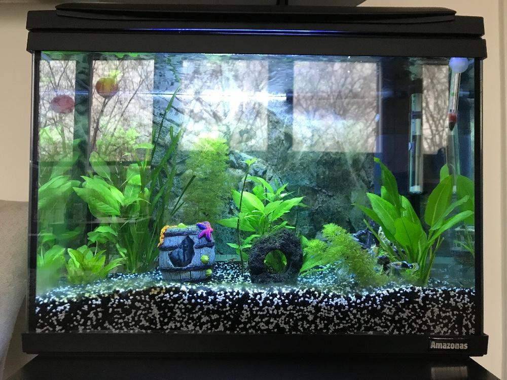 gute aquarien marken sch ne aquarien zoo busch gmbh g ttingen aquarium f r kinder. Black Bedroom Furniture Sets. Home Design Ideas