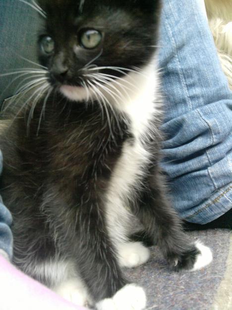 Baby Katzen Abzugeben 301685
