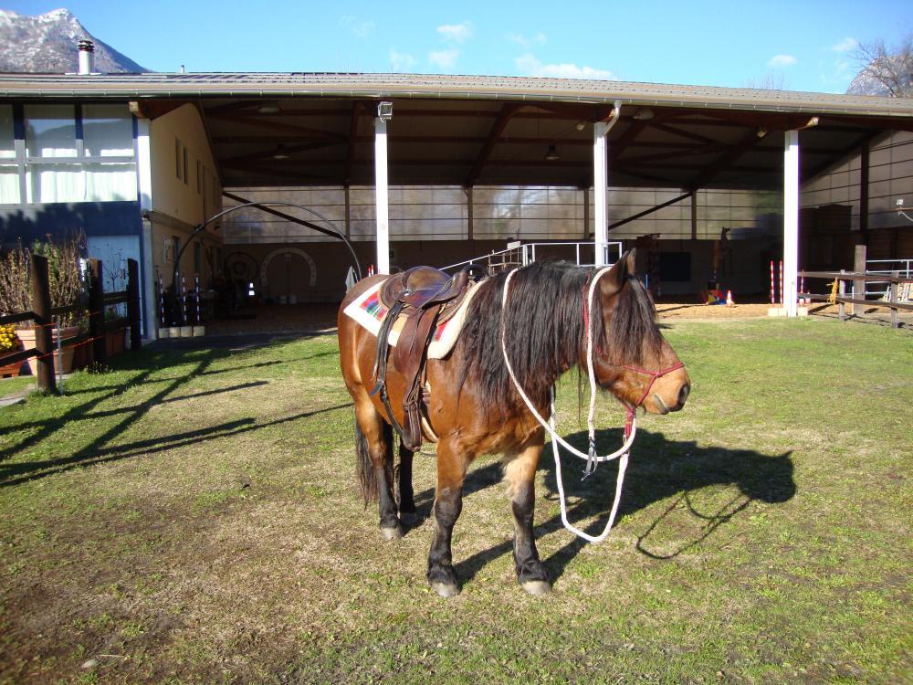 bardigiano pferde zu verkaufen 484912. Black Bedroom Furniture Sets. Home Design Ideas