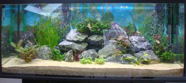 gratis aquarienfische 883301. Black Bedroom Furniture Sets. Home Design Ideas