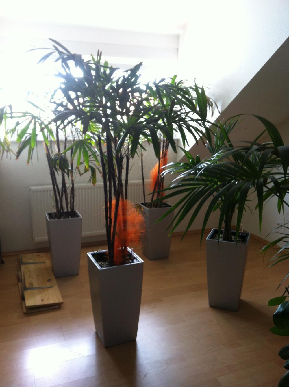 g nstig pflanzen zu verkaufen 812720. Black Bedroom Furniture Sets. Home Design Ideas