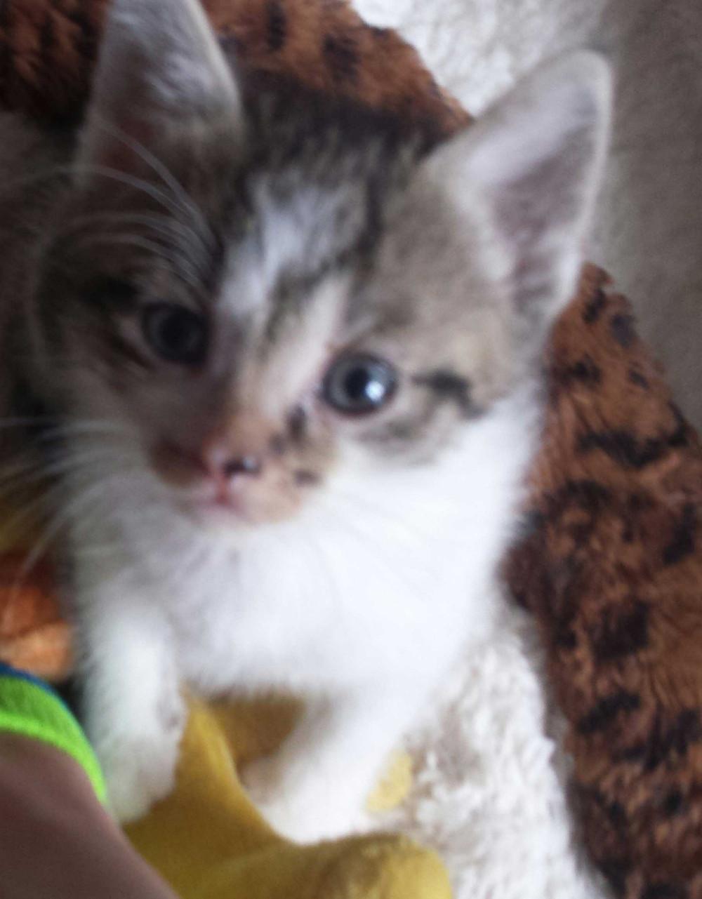 Katzenbabys abzugeben! - 852114