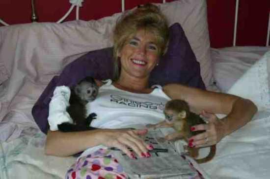 Lovely Kapuziner Affen Ein Neues Zuhause Zu Jedem Tier Liebevolle