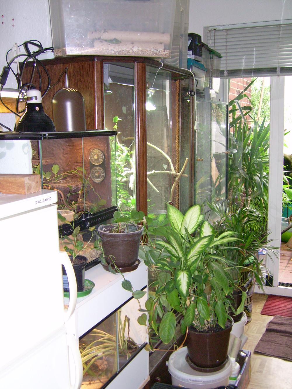 pflanzen f r terrarien aus eigenem anbau kologisch ohne gift 853898. Black Bedroom Furniture Sets. Home Design Ideas