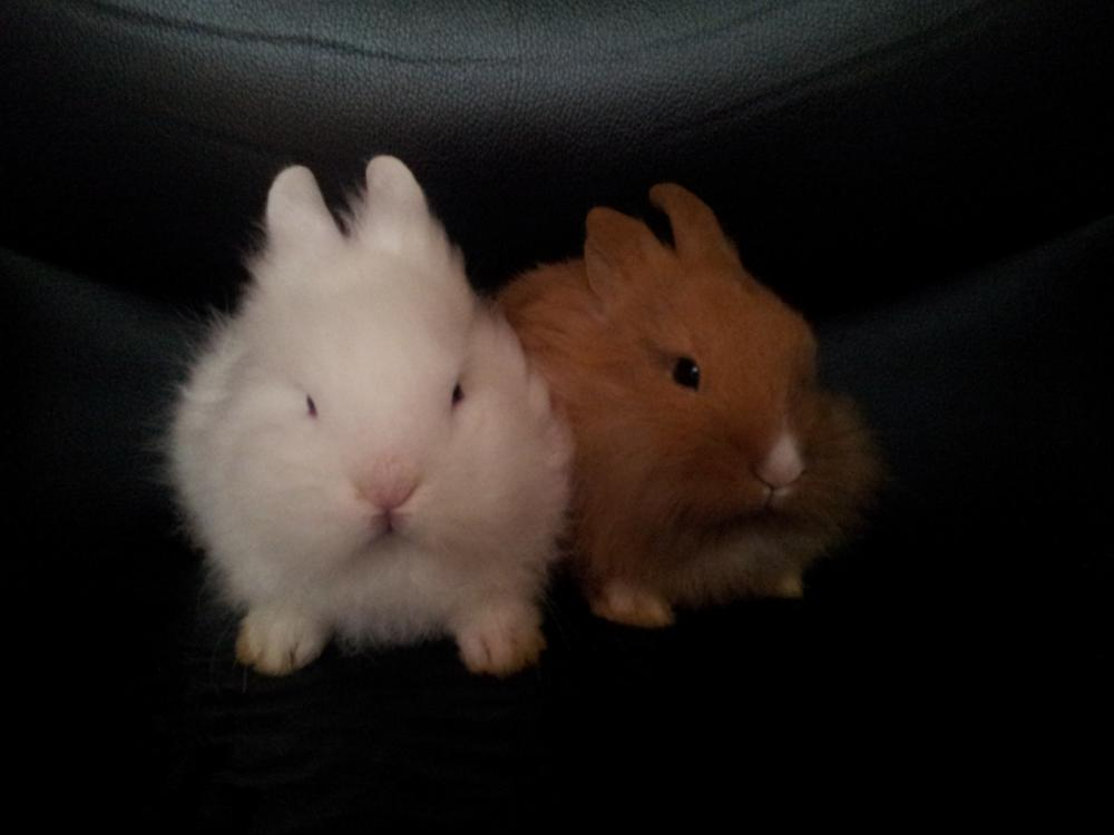 Gartenmobel Hoffner Rostock : Schöne Babys Kaninchen zu verschenken  653461